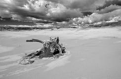 Tronçon d'arbre de bois de flottage avec des racines sous des cumulus sur la plage de Ventura en Californie Etats-Unis - noire et images libres de droits