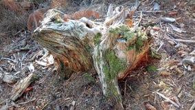 Tronçon d'arbre de décomposition Restes de beauté passée Photo triste La beauté de la nature dans sa tristesse photos stock