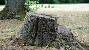Tronçon d'arbre en parc photo libre de droits
