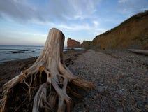 Tronçon d'arbre et la mer Photos stock
