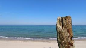 Tronçon d'arbre mort sur la plage images stock