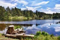 Tronçon d'arbre par un lac Image libre de droits