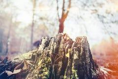 Tronçon d'arbre putréfié moussu Image libre de droits