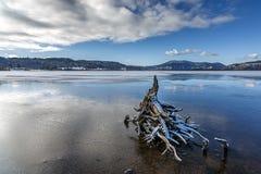 Tronçon d'arbre sur le lac congelé image libre de droits