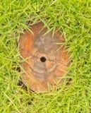 Tronçon dans l'herbe verte. Photographie stock