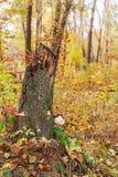 Tronçon dans la forêt d'automne Images stock