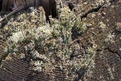 Tronçon dans la mousse dans la forêt d'automne Photographie stock libre de droits