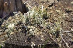 Tronçon dans la mousse dans la forêt d'automne Image libre de droits