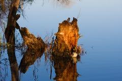 Tronçon dans un marais. Photo stock