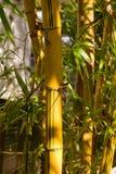 Tronçon en bambou Image stock