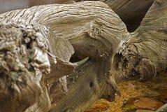 Tronçon en bois Images stock