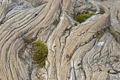 Tronçon en bois Photographie stock libre de droits