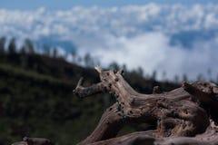 Tronçon en bois Image stock