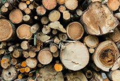 Tronçon en bois dans une forêt Images libres de droits