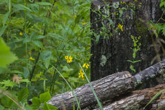 Tronçon et fleurs jaunes Photographie stock