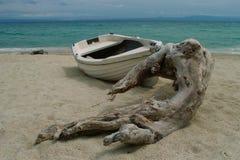 Tronçon marin Image libre de droits