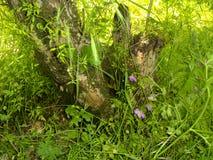 Tronçon parmi l'herbe verte Photographie stock