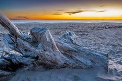 Tronçon sur une plage Image stock