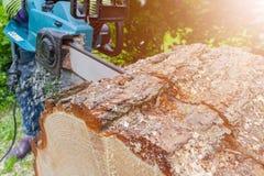 tronçonneuse Tronçonneuse en bois de coupe de mouvement Le bois de coupe d'homme avec a vu La poussière et mouvements Plan rappro Photographie stock