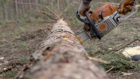 Tronçonneuse en bois de sawing d'homme banque de vidéos