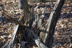Tronçons cassés sur le plancher de forêt photographie stock