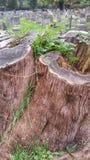 Tronçons d'arbre Images stock