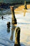 Tronçons d'arbre Images libres de droits