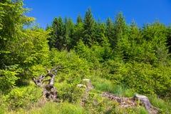 Tronçons d'arbre Photo libre de droits