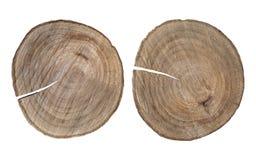 Tronçons d'arbre d'isolement sur le fond blanc images stock