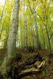 Tronçons d'arbre morts en bois d'automne Photo libre de droits