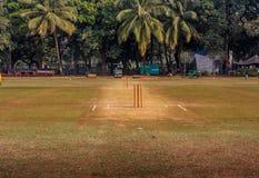 Tronçons de cricket image libre de droits