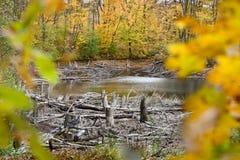 Tronçons et accrocs autour du lac dans la forêt image libre de droits