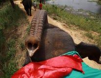 Tronc - éléphant exigeant un snak Image stock