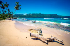 Tronc abandonné sur la plage de Playa Rincon en République Dominicaine  Photos libres de droits