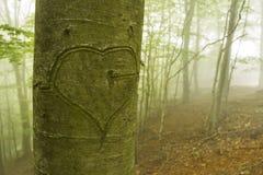 Tronc avec le coeur découpé dans la forêt verte Photo libre de droits