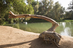 Tronc d'arbre à côté d'un étang en parc rural Photographie stock
