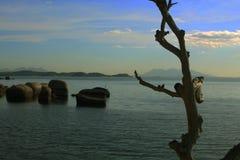 Tronc d'arbre, île brésilienne Photographie stock
