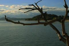 Tronc d'arbre, île brésilienne Image libre de droits
