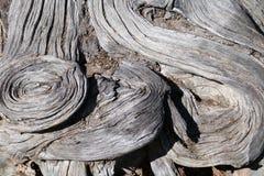 Tronc d'arbre Photo libre de droits
