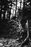Tronc d'arbre Image stock