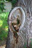 Tronc d'arbre Images stock