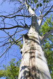 Tronc d'arbre Photo stock
