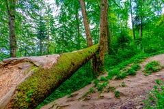 Tronc d'arbre Photographie stock libre de droits