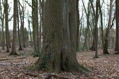 Tronc d'arbre Photos stock
