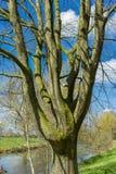 Tronc d'arbre Image libre de droits