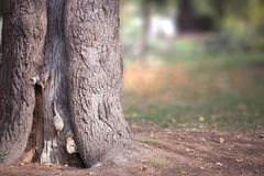 Tronc d'arbre automnal photographie stock