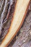 Tronc d'arbre avec l'écorce isolée Photos stock