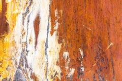Tronc d'arbre avec le beau modèle Image libre de droits