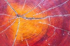 Tronc d'arbre avec le beau modèle Images libres de droits