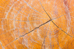 Tronc d'arbre avec le beau modèle Image stock